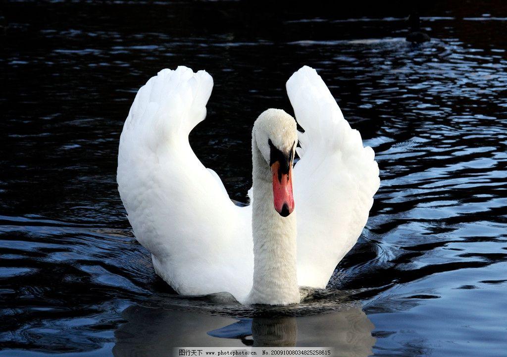 小河和白鹅儿歌简谱