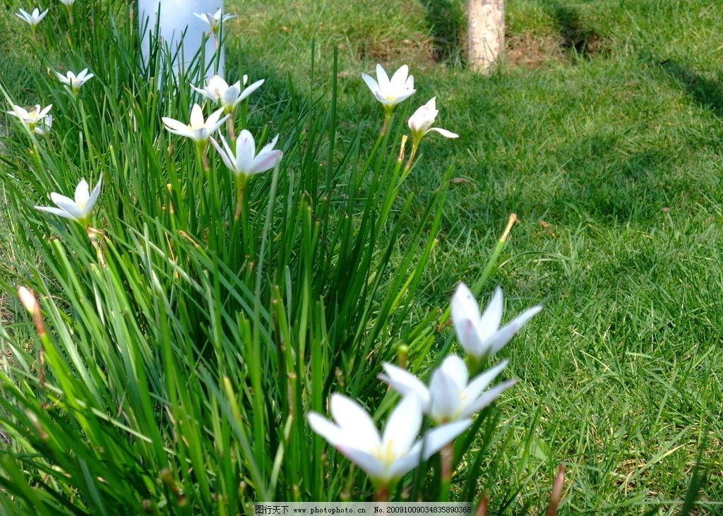 花草 背景图 摄影图 小白花 绿草 花朵 叶子 自然风景 自然景观