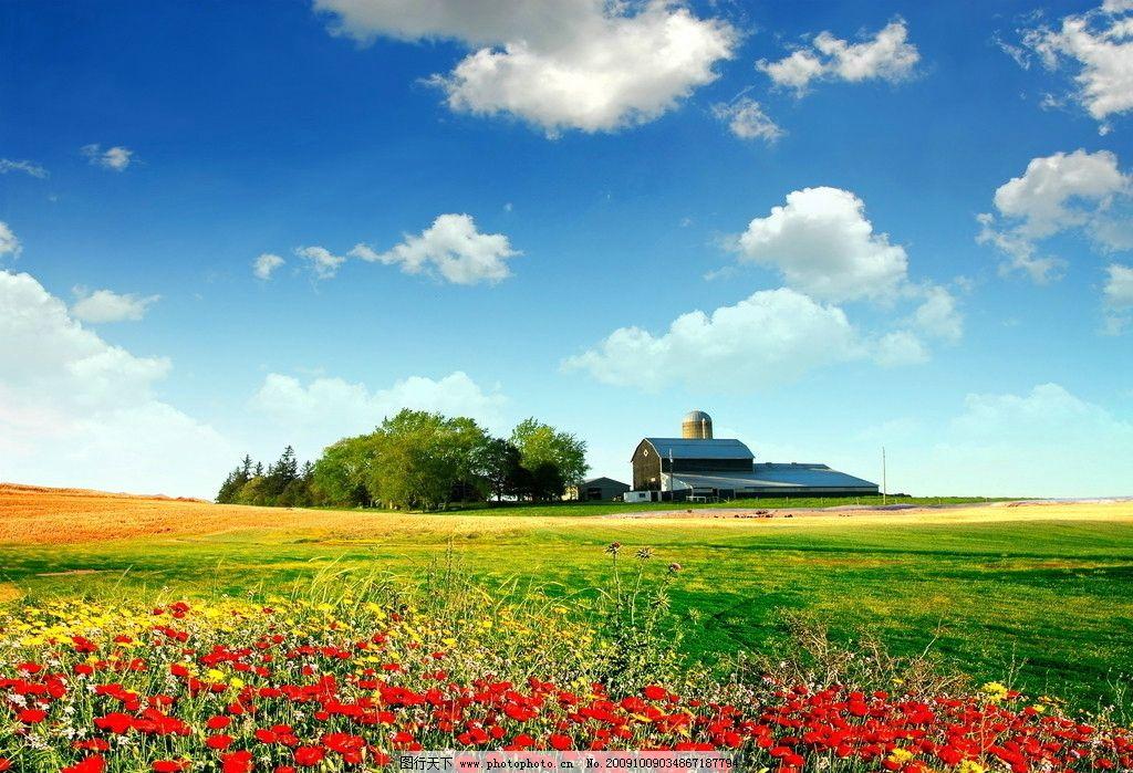 壁纸 草原 成片种植 风景 植物 种植基地 桌面 1024_699