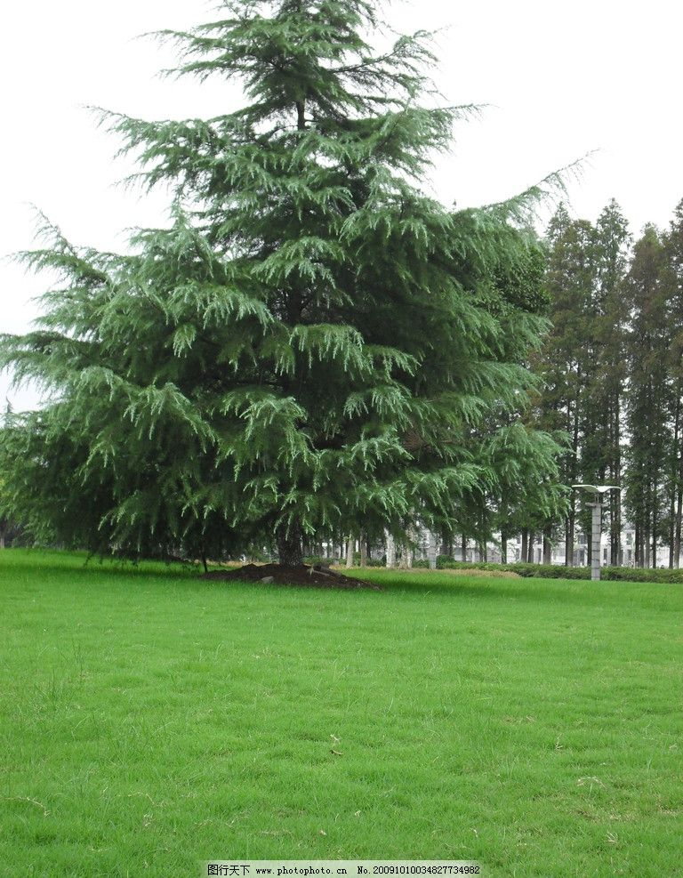 大树 树木 草地 绿色 草坪 自然风景 自然景观 摄影 96dpi jpg