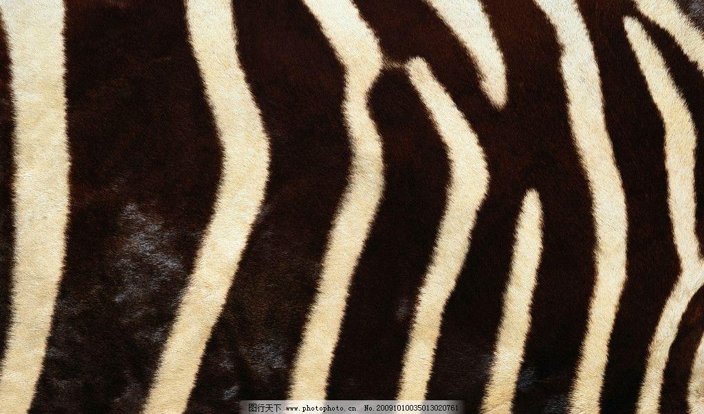 动物皮纹 纹理 背景 静物 纹络 毛皮 斑马皮 摄影