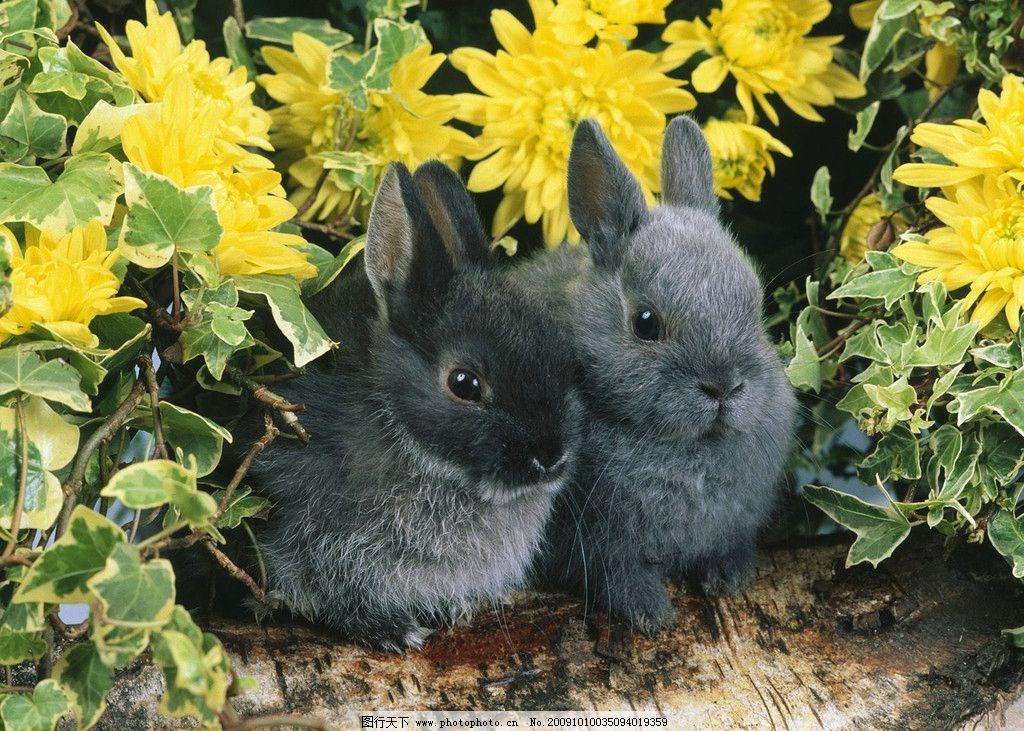 小兔子 可爱 小兔 兔子 小灰兔 红色花 花丛 菊花 野生动物 生物世界