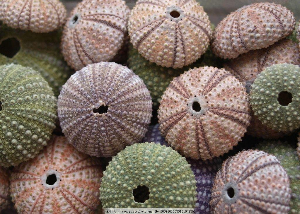 彩色贝壳 五颜六色 圆形贝壳 海洋生物 可爱 漂亮 生物世界 摄影 314