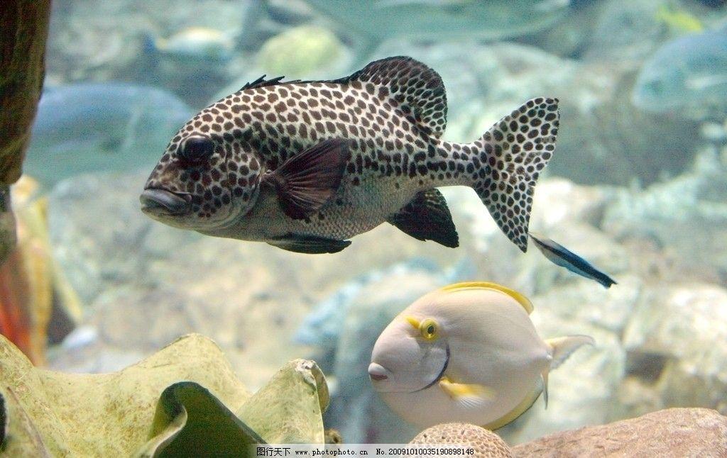 海洋生物 清澈的海洋大鱼小鱼游乐 海底世界 风光 鱼 海水 湖泊 大海