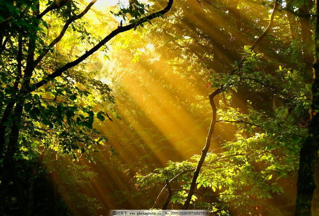 野外 天空生态 自然 林间阳光 自然景观 田园风光 摄影图库 花草树木