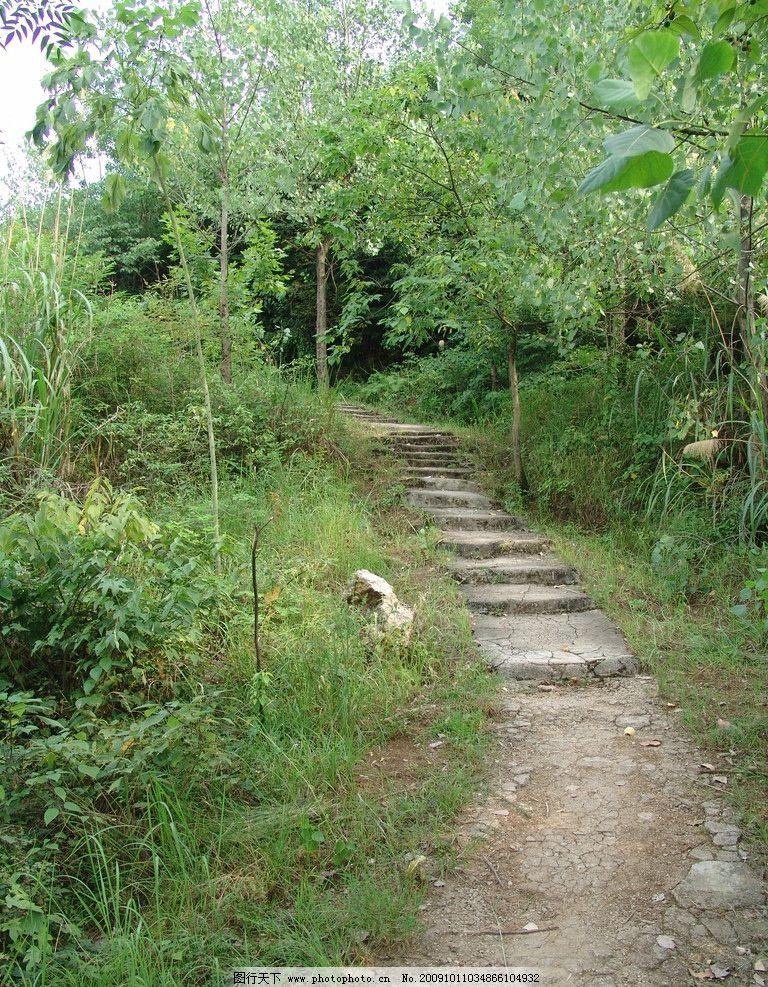 林间小道 乡间小路 树林 绿叶 杂草 自然景观 自然风景 摄影图库 家乡