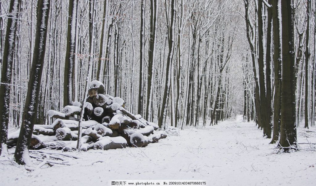 森林雪地 森林 雪地 冬景 冬天 雪景 白茫茫 白雪 自然风景 自然景观图片