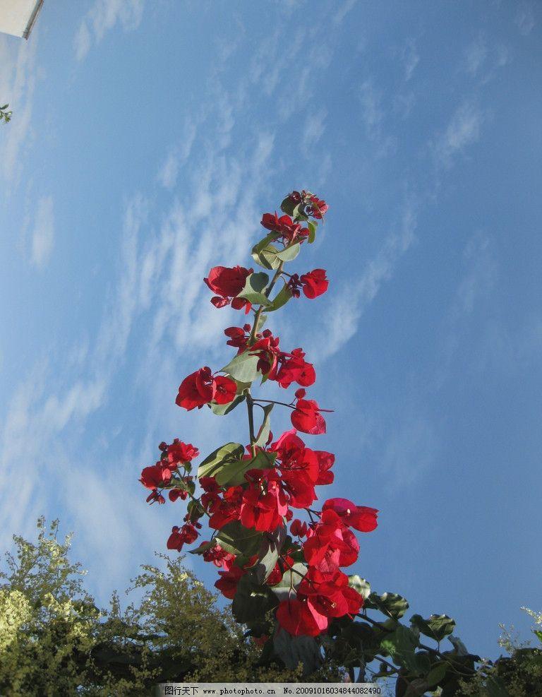 一枝花 风景 蓝天 鲜花 自然风景 自然景观 摄影 180dpi jpg
