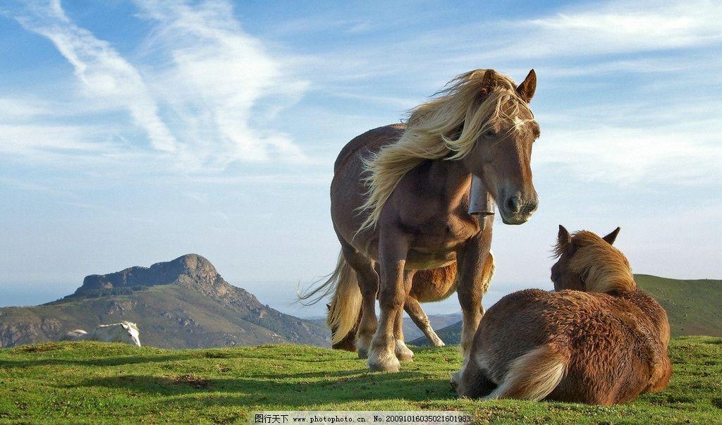 动物 草原 蓝天 白云