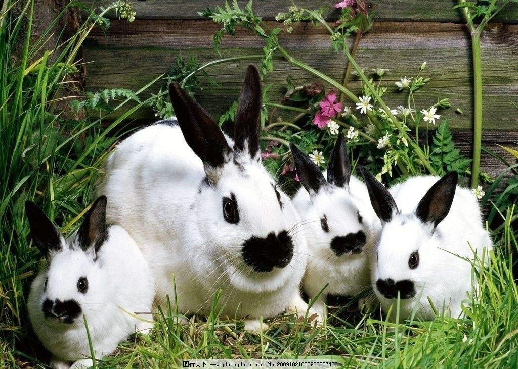 壁纸 动物 狗 狗狗 兔子 1024_731