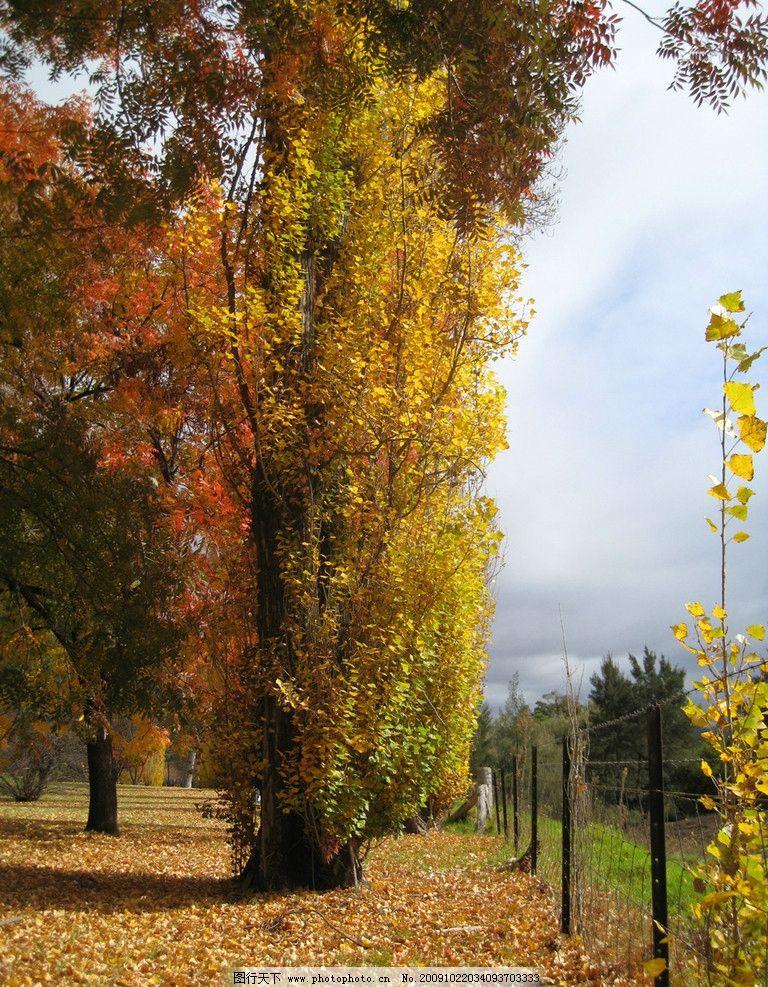 深秋红叶 澳洲 悉尼市郊 自然风景 澳洲自然风光 国外旅游 旅游摄影