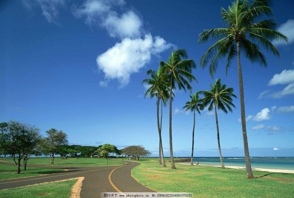 大海风光 浪花 海浪 蓝天 白云 天空 椰子树 树木 道路 草地 大海风景