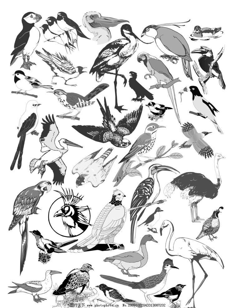 动漫小鸟图片