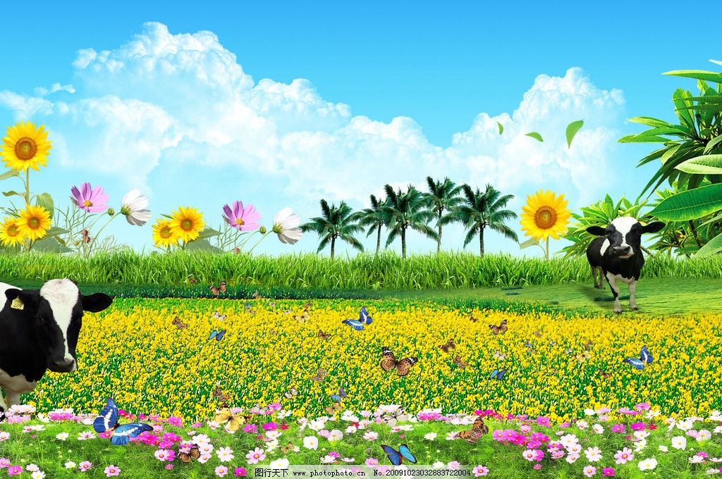 田野 鲜花 油菜花 奶牛 蝴蝶飞舞 蓝天白云 草地 绿茵 绿叶 椰树 风景