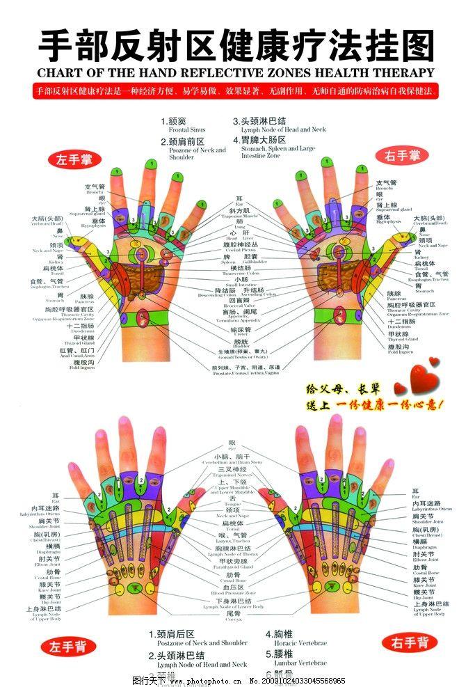 中医 手 针灸 穴位 手背 手心 手部反射区 将抗疗法 结构 分布图 psd
