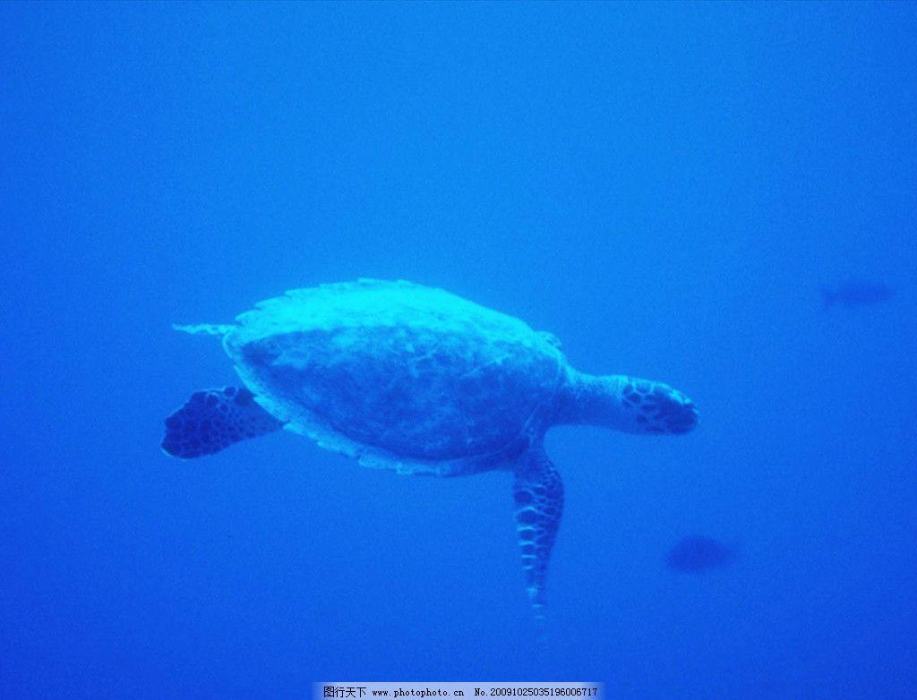动物图片集锦 可爱海龟
