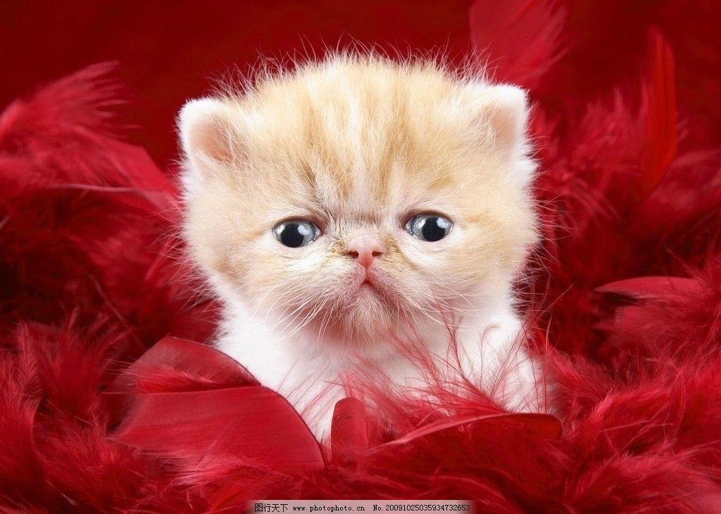 可爱的幼猫图片