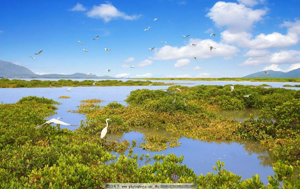 温泉酒店图片 大海 海鸥 天空 蓝天 白云 岛 海湾 碧水 鸟 园林建筑