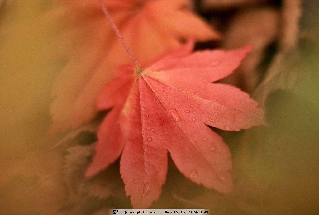 美丽的树叶图片