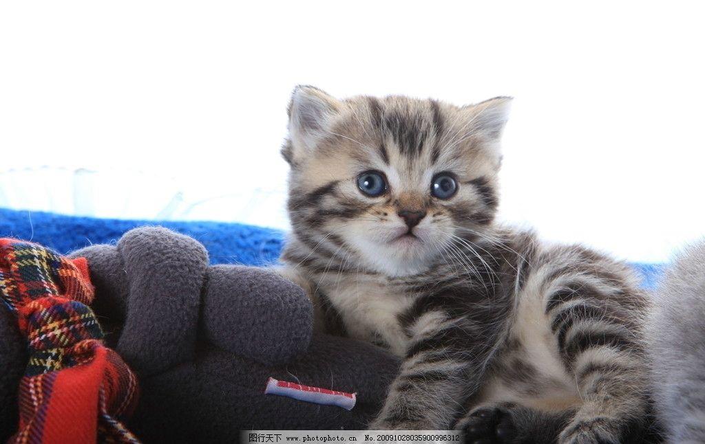 可爱猫咪01图片