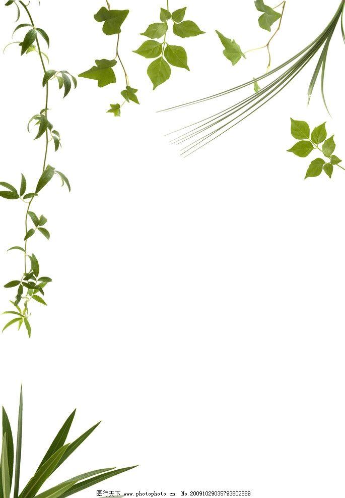 花边 花边素材 花 素材 绿色花瓣 花瓣 红色花瓣 红色 绿色 边框 边