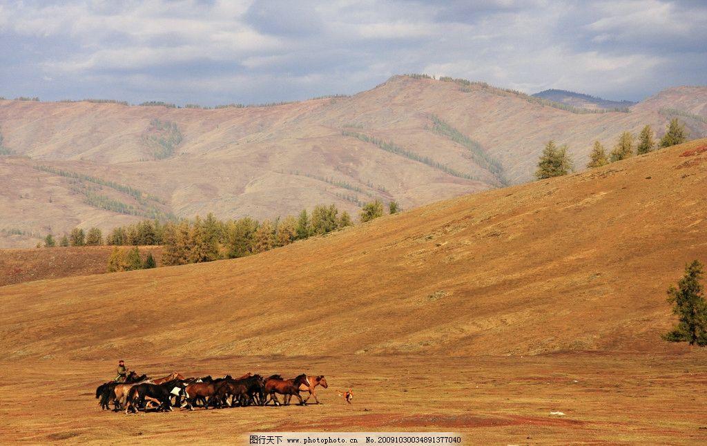 秋天风景 高原 草原 马群图片
