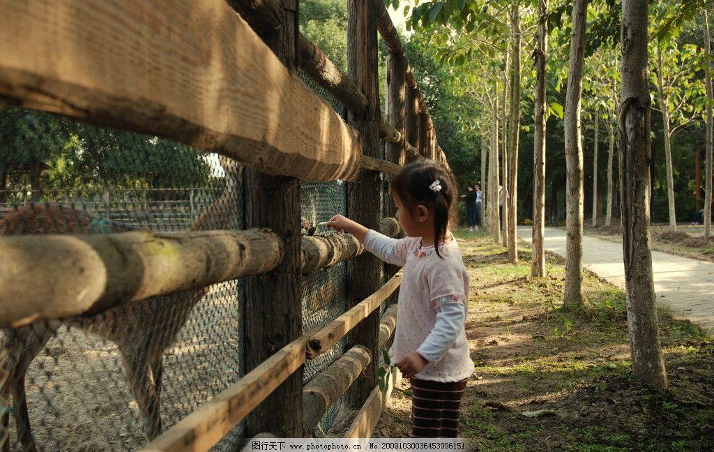 人与动物 小鹿 儿童 小孩 动物园 大千生态园 喂食 快乐童年 儿童幼儿