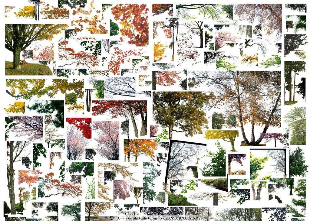 前景樹素材        室外 配景 園林 景觀 樹 貼圖 建筑配景 裝飾 風景