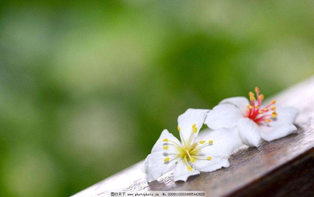 白色的花 花 白花 意境 自然风景 自然景观 摄影 350dpi jpg