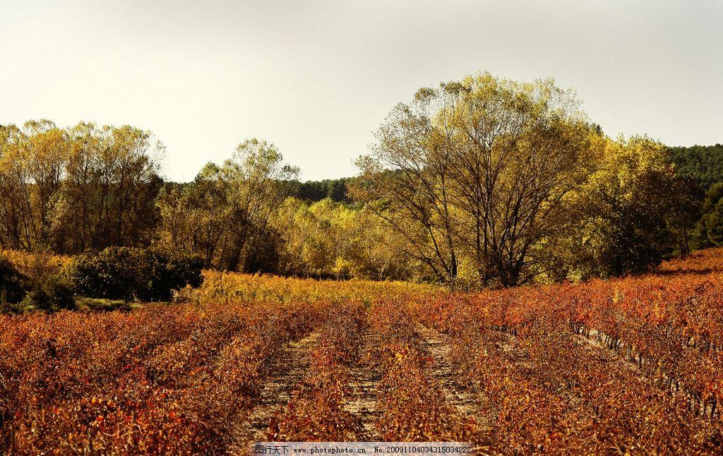 风景 国外风景 树 树林 草花 秋天 我的图片 其他 旅游摄影