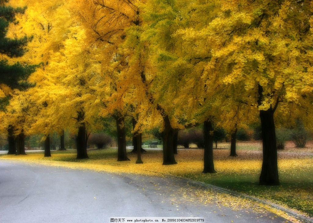 枫叶林 红叶 枫树 红色 风景 小路 公路 秋天 黄叶 摄影