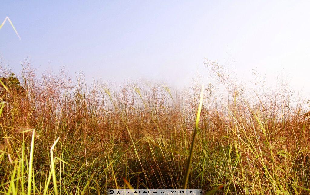 枯草 天空 云 山 意境 荒草 秋天的景色 自然风景 自然景观 摄影 72