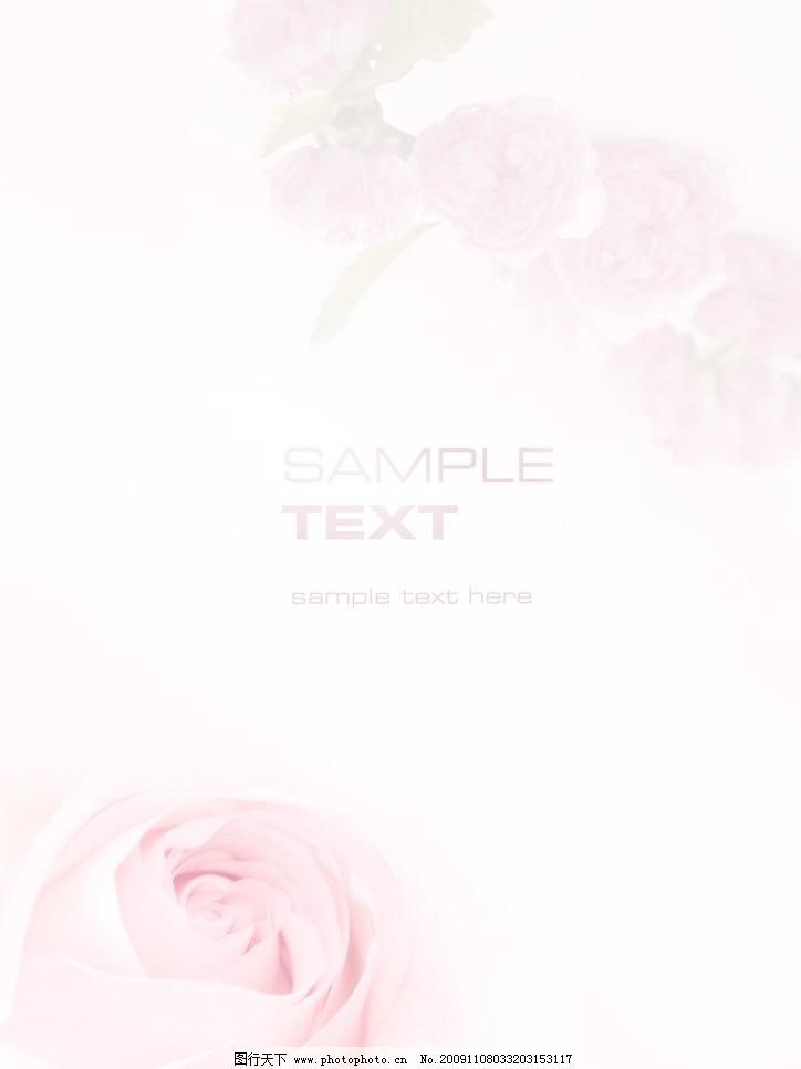 psd 粉红背景 粉红玫瑰 花 玫瑰 其他 水仙花 源文件 粉红背景素材