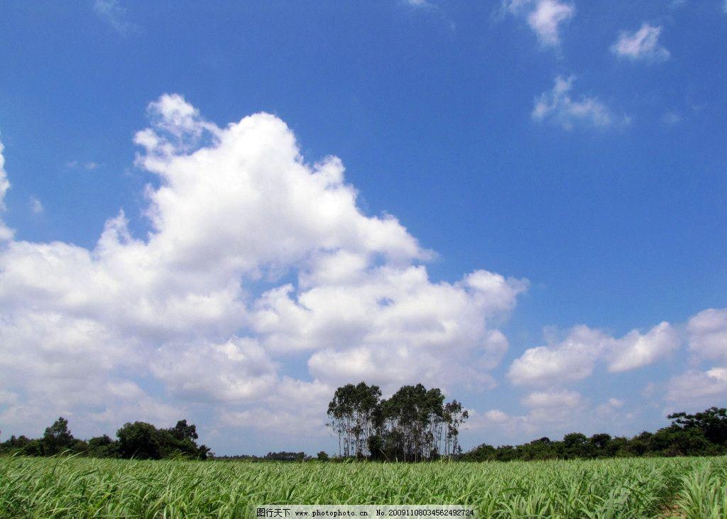 蓝天下的甘蔗园 蓝天 白云 甘蔗 树木 田园风光 自然景观 摄影 180dpi