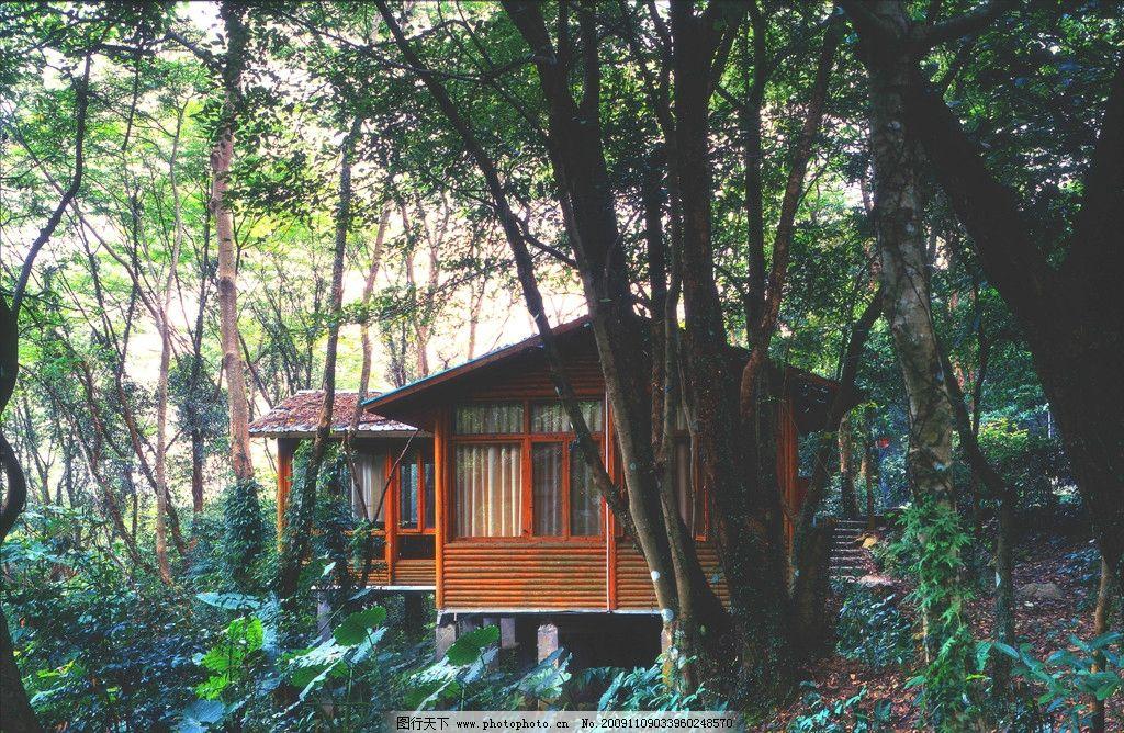 古代树林木屋图片