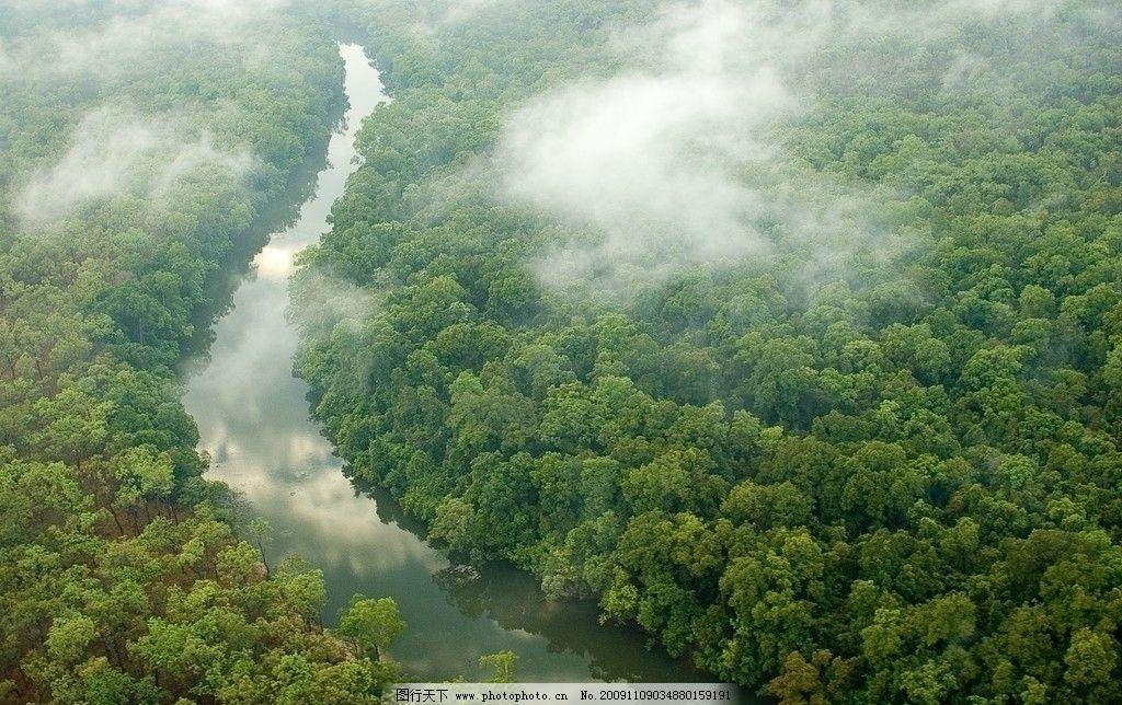 热带雨林 原始森林 植被 植物 森林 丛林 热带 自然风景 自然景观图片