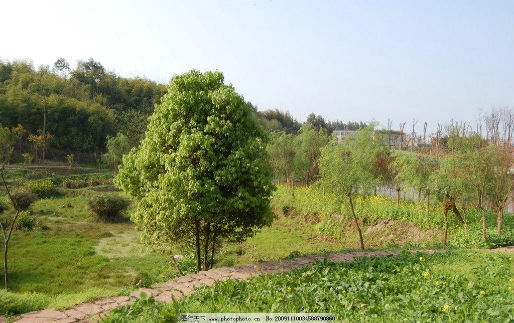田园小树 田园 小树 菜地 小路 田园风光 自然景观 摄影 300dpi jpg