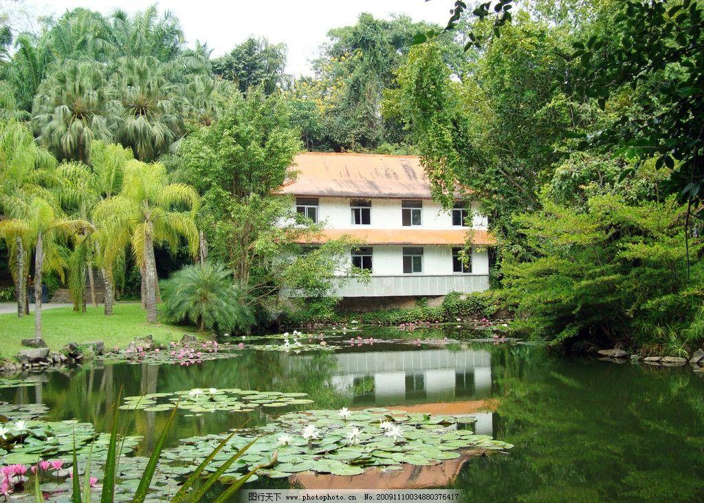摄影图库 自然景观 自然风景  西双版纳植物园风光 西双版纳 植物园