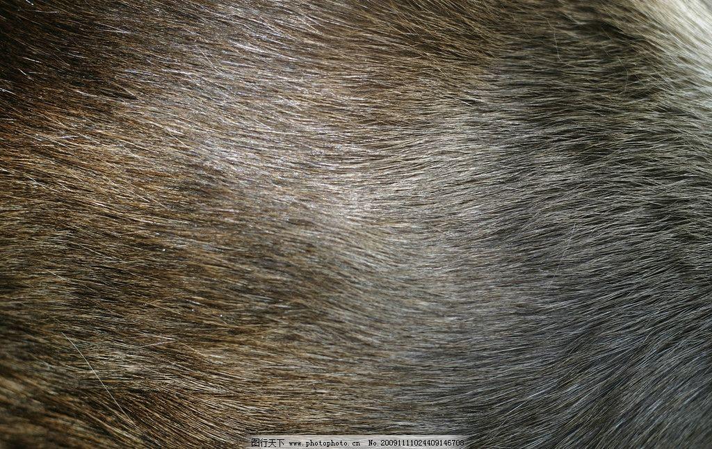 动物皮毛图片,高清 特殊 好看-图行天下图库