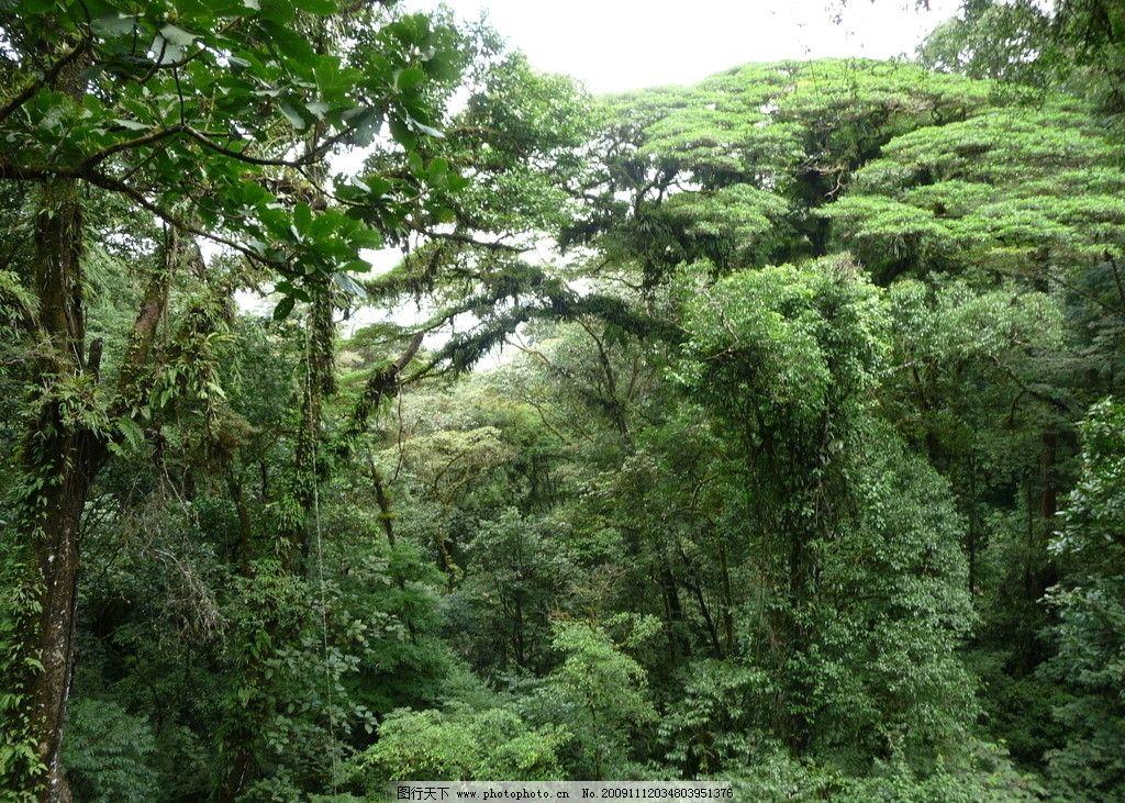 雨林 热带雨林 原始森林 植被 植物 丛林 自然风景 自然景观
