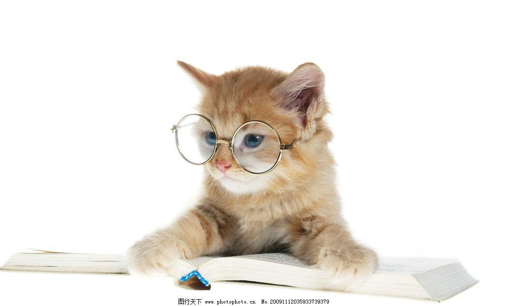 戴眼镜的可爱小猫图片
