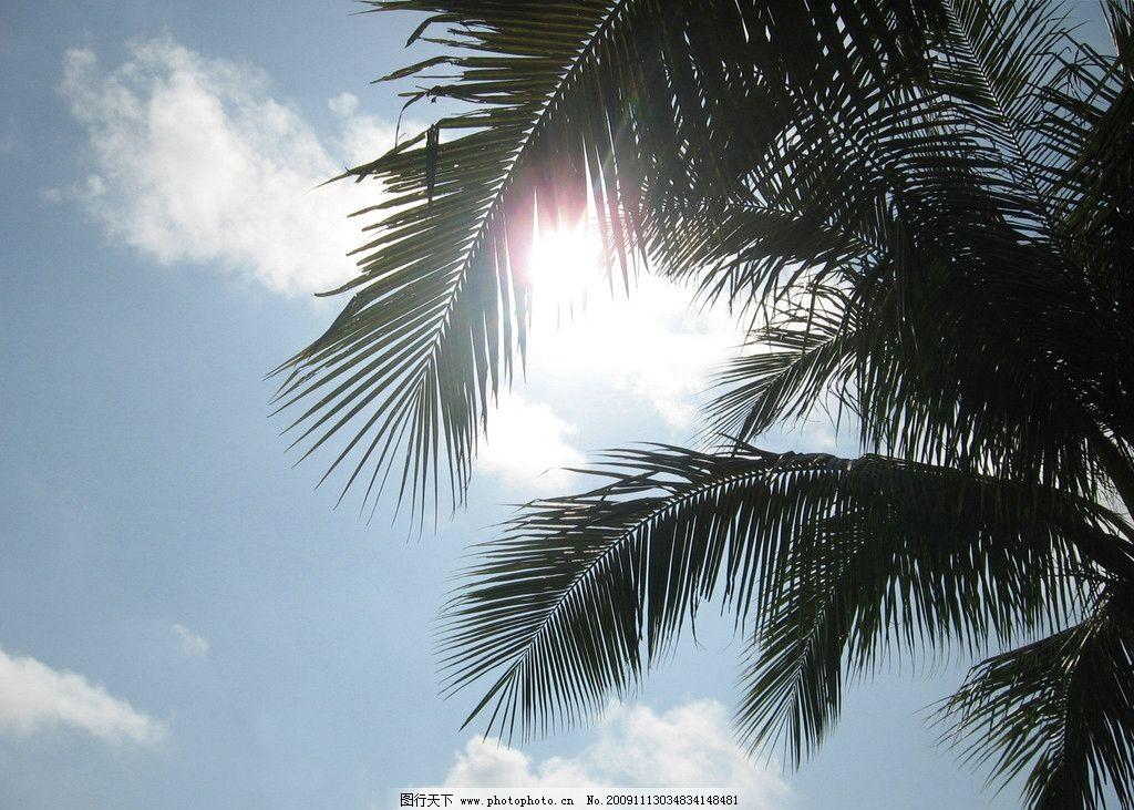 椰子树 蓝天 白云 阳光 天空 夏日风情 树木 摄影素材 逆光 自然风景