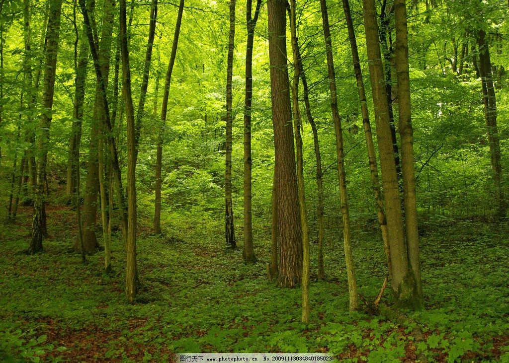 森林 原始森林 植被 植物 丛林 大树 自然风景 自然景观 摄影 314dpi