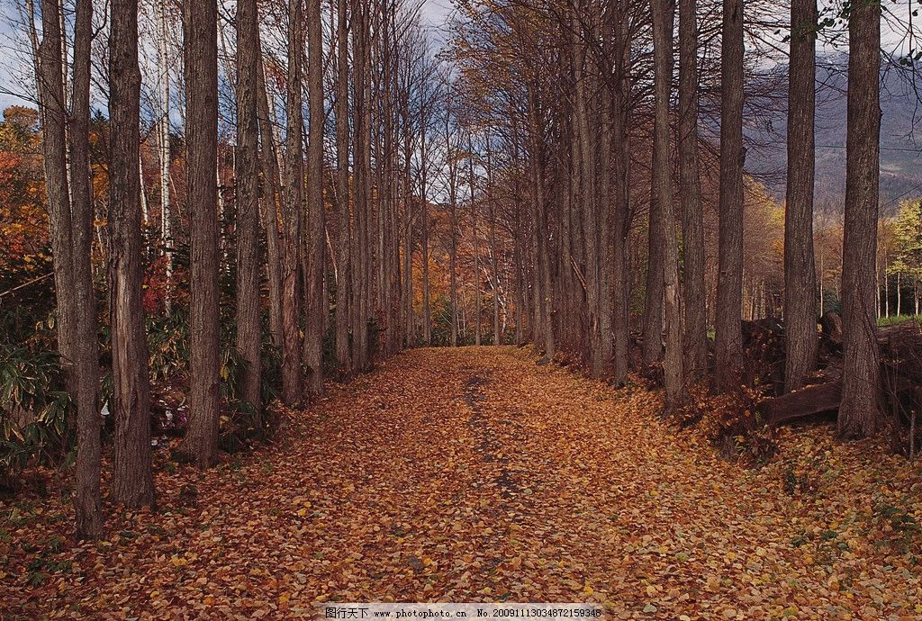树林 落叶 秋天 景色贴图 自然风景 自然景观 摄影