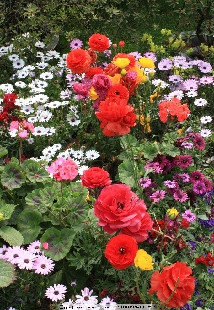 百花齐放 红花 小白菊 小黄花 自然风景 自然景观 摄影 72dpi jpg