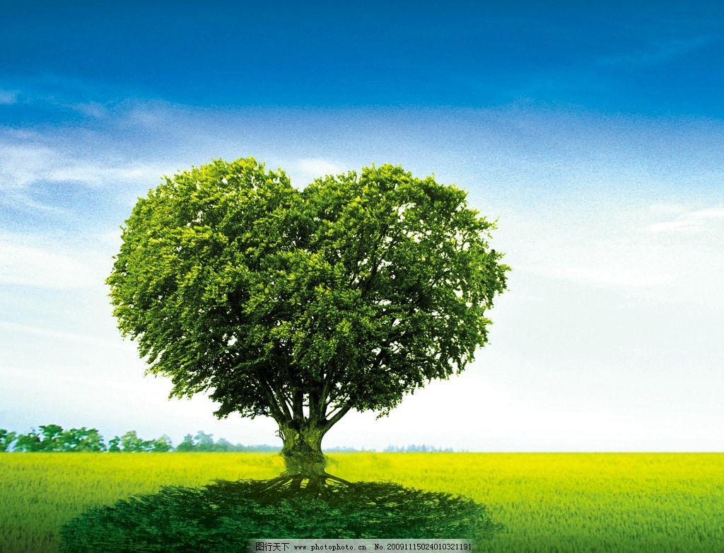 风景树 树 绿色 草地 天空 白云 绿色植物 黄色草地 蓝天 树阴 影子