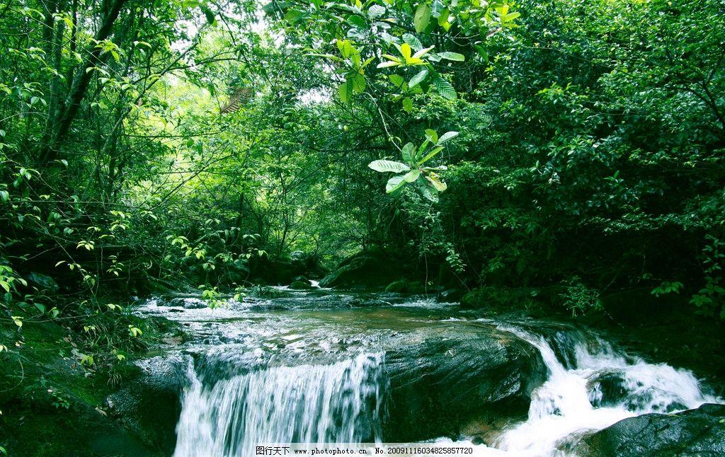 小溪 树林 水流 水花 石头 河流 绿色 树 自然风景 自然景观 摄影 72