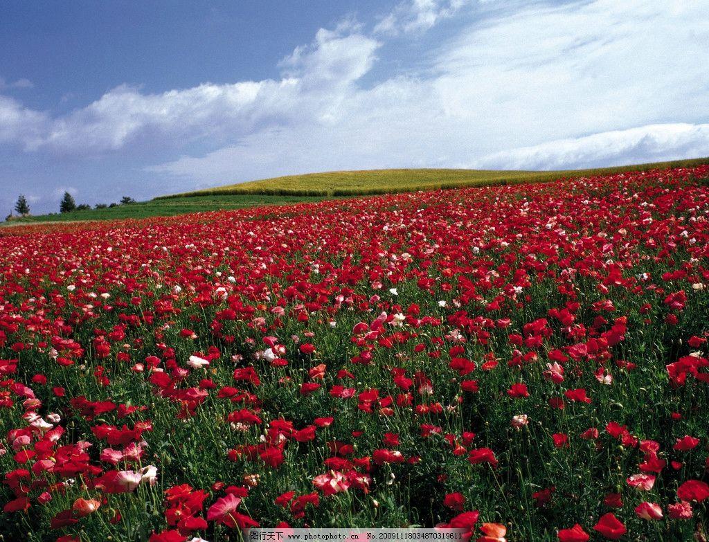 百花4 红色 花朵 天空 绿地 树木 绿色 百花娇美 自然风景