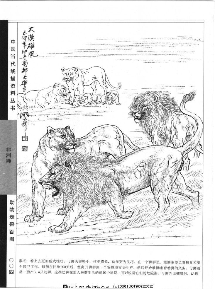 狮子黑白线描装饰画