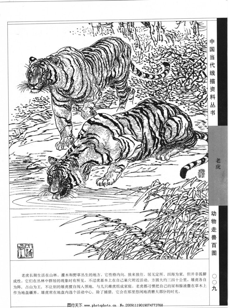 动物走兽百图 百兽 线描 白描 黑白稿 线描动物 老虎 狮子 豹
